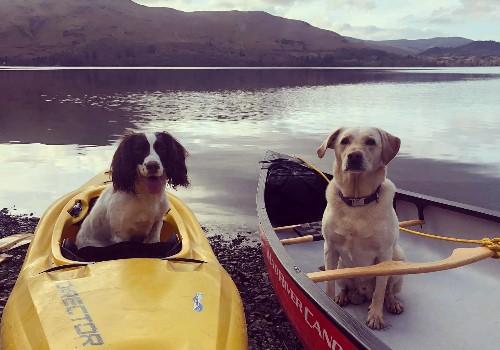 Buddy and Roman, the Keswick Adventures dogs